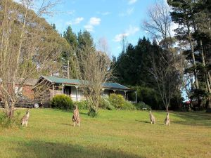Cedar Lodge Cabins - Kempsey Accommodation
