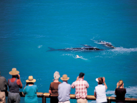 Whale Watching At Head Of Bight - Kempsey Accommodation