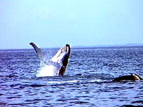 Whale Watching - Kempsey Accommodation