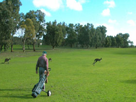 Coffin Bay Golf Club - Kempsey Accommodation