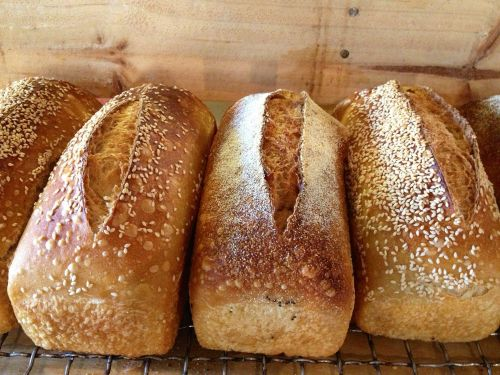 Blackbird Artisan Bakery - Kempsey Accommodation