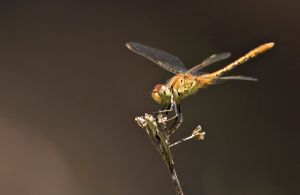 Dragonfly Discovery - Kempsey Accommodation