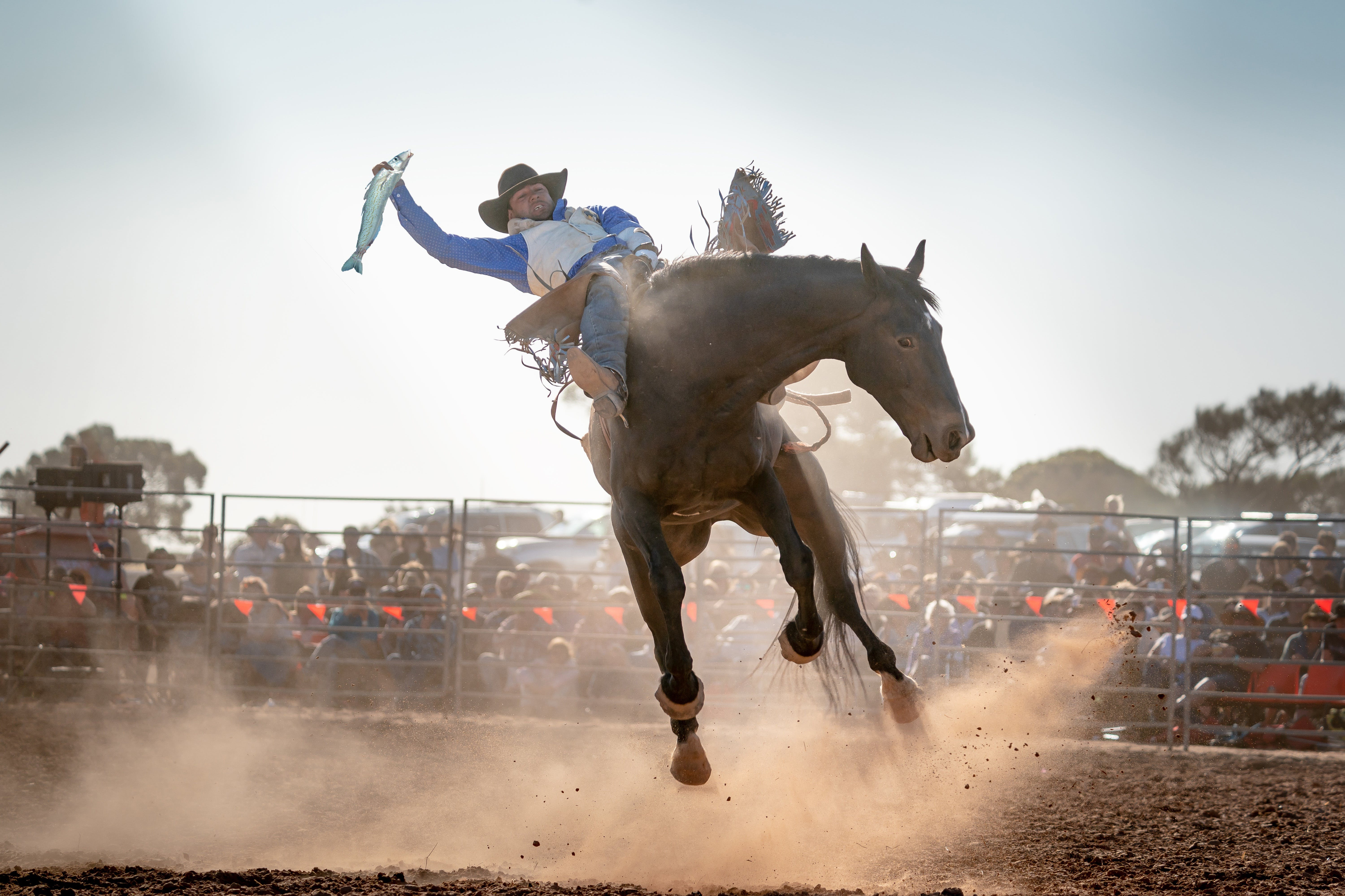 Rodeo by the Sea - Streaky Bay - Kempsey Accommodation